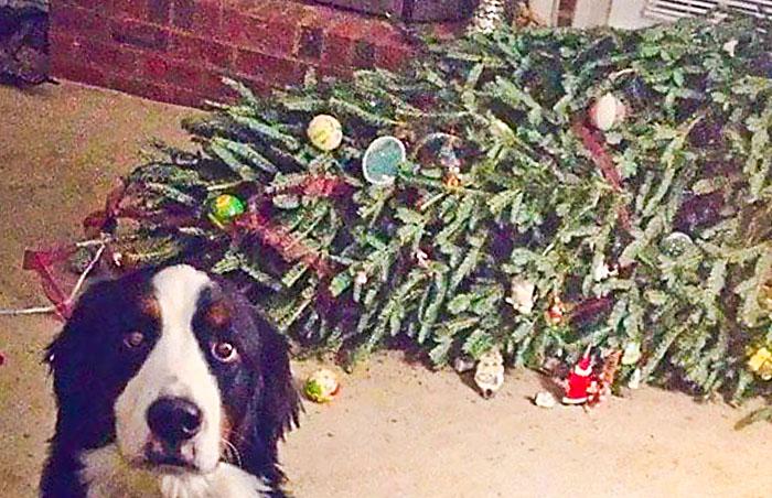 Bilderesultat for rasert julepynt