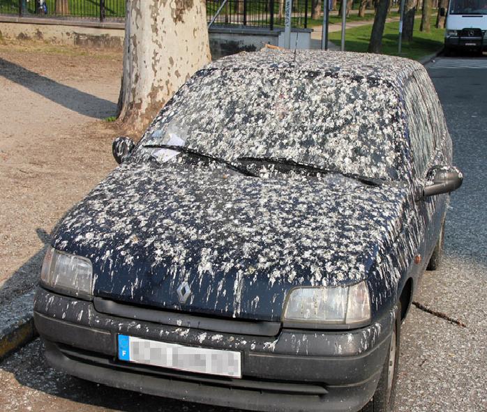 angry-birds-morsomme-bilder-tldr