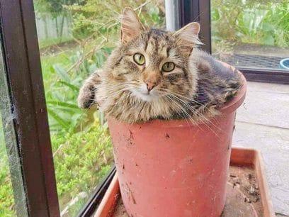 Katteplanter - Den nye prydplanten som hater vann.