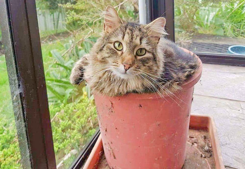 Katteplanter – Den nye prydplanten som hater vann.