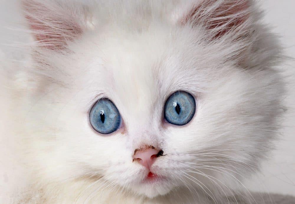 20 Katter som har fått skikkelig baksmell på skatten.
