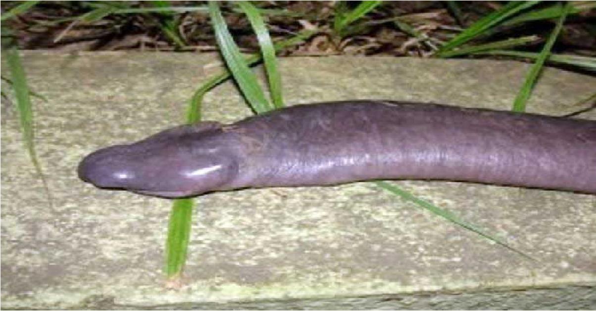tynn penis chattesider i norge