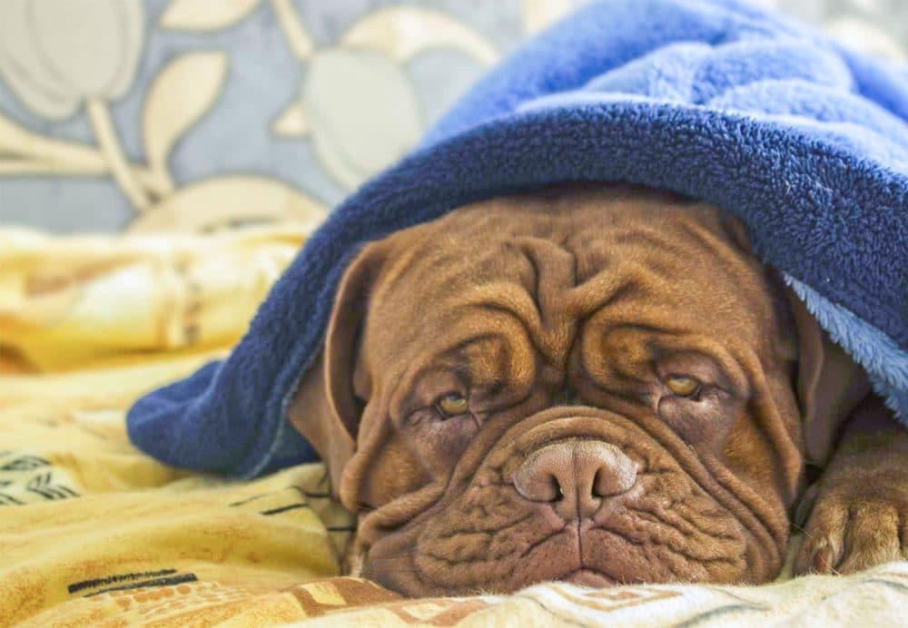 20 TOTALT UTSLITTE hunder som utvilsomt har overivrige eiere med tung ADHD!