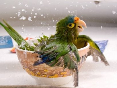 10 Super søte giffer av dyr som koser seg med et bad.
