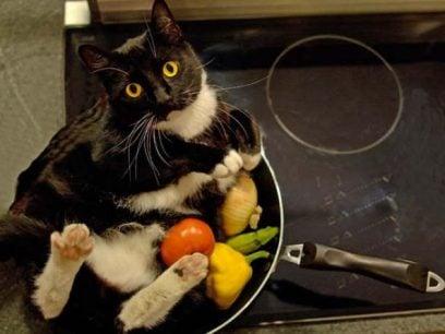 Hvordan lage mat med katten din i 21 enkle steg