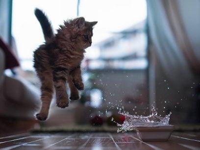 14 Super morsomme giffer av ekstremt skvetne katter.