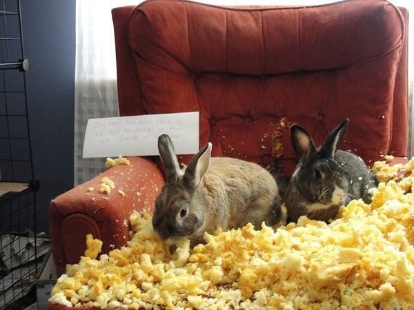 20 Kaniner som planlegger å ta over verden et hus av gangen.