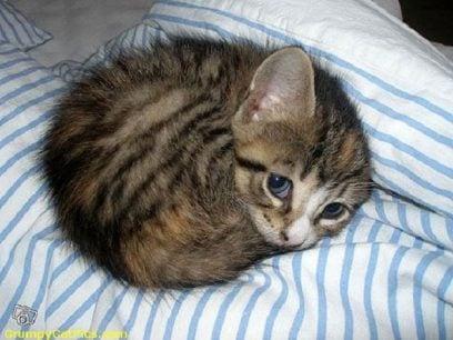 20 Av verdens tristeste katter du noensinne får se.