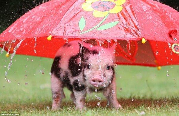 15 Super søte dyr som gjør alt de kan for å slippe unna regnet.