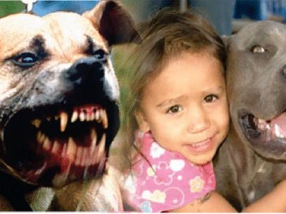 Disse filmene viser hvorfor barn og hunder ALDRI bør være sammen!