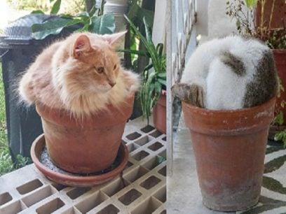 Katte planter, den nye planten som hater vann.