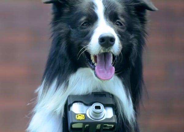Grizzler er verdens første hunde-fotograf