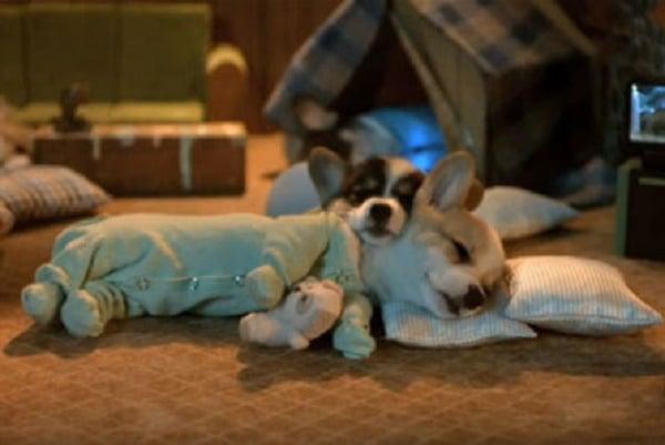 Dyr som beviser at helgen er tiden for pyjamas hele dagen.