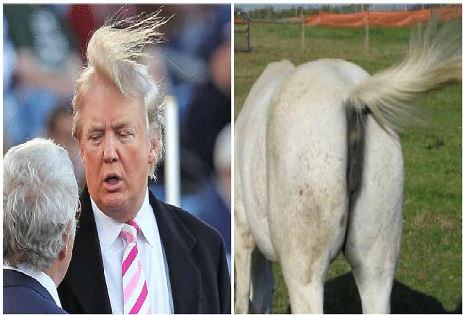 11 morsomme bilder som ligner på Donald Trump