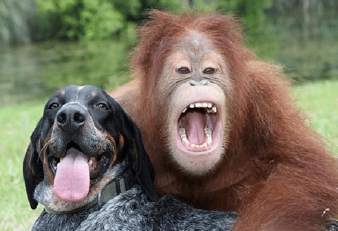 13 utrolige vennskapsbilder fra dyreverden (Gifanimasjoner)