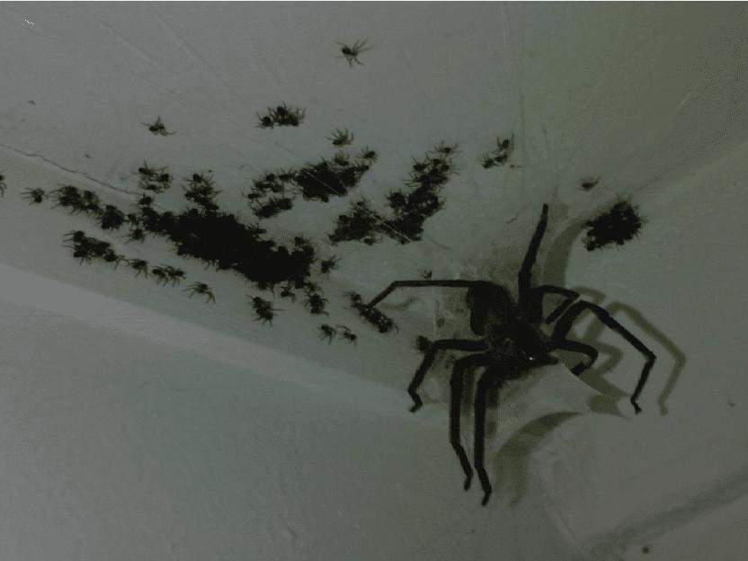 12 bilder du med edderkoppfobi absolutt IKKE må se!