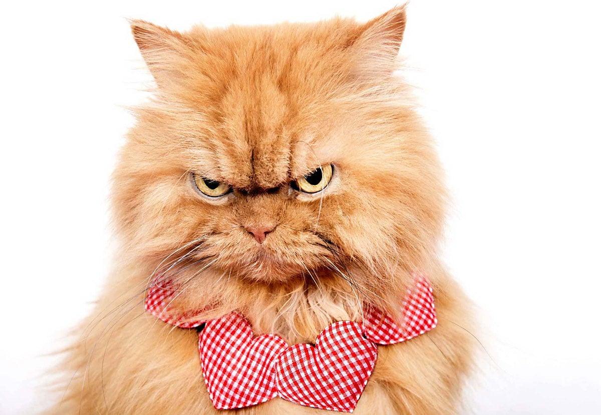 Ikke «Garfield», men «Garfi» – Verdens sinteste katt !