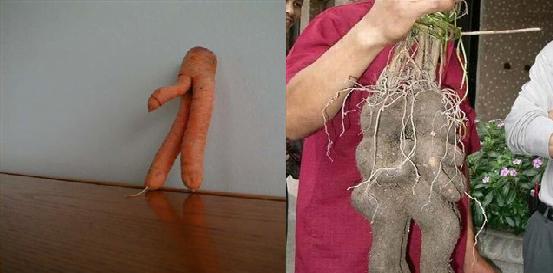 Morsomme og litt perverse grønnsaker