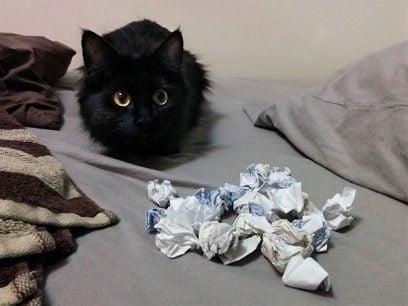 20 Bilder av søte katter med ekstrem samlemani