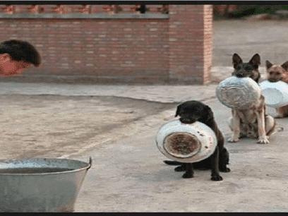 Se filmen som få enhver udisiplinert hundeier til å virke TILBAKESTÅENDE!