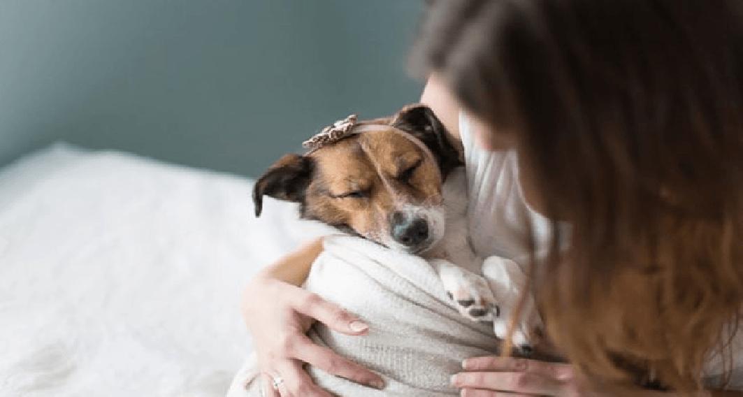 11 tegn på at du er en gal hunde-eier som tror du har en baby!