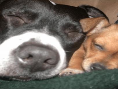 12 hunder med DUMME eiere som ikke forstår at de har vannskrekk!
