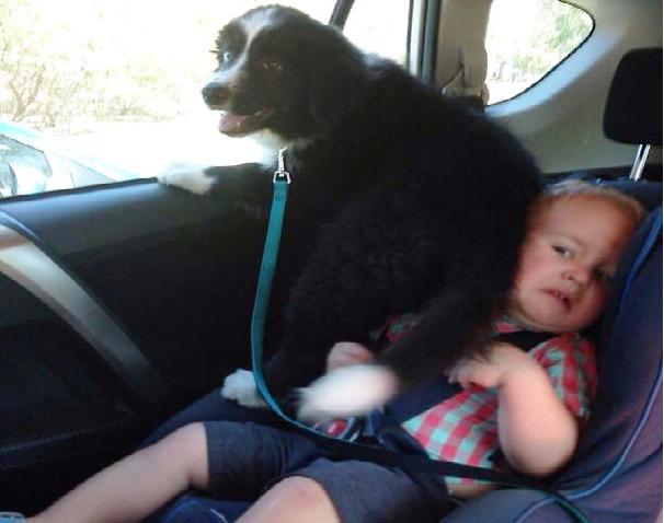 Enda flere bevis på at hunder er drittsekker