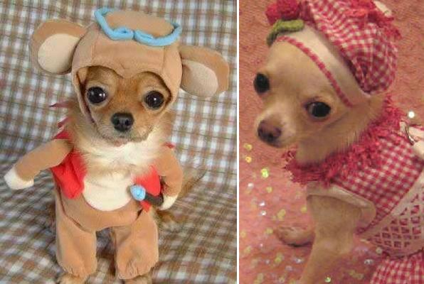 19 hunder med klær som ser både dumme og morsomme ut