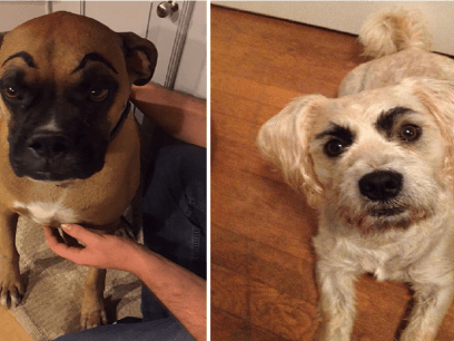 16 bevis på at hunder ser idiotiske ut med øyenbryn!