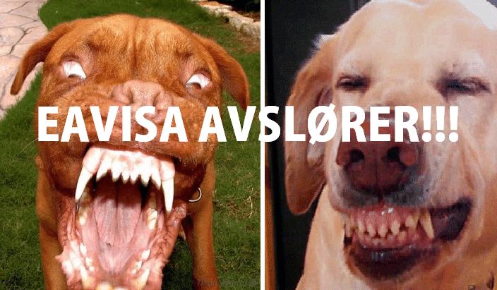 Bildene som beviser at hunder samarbeider med satan for å ta over verden