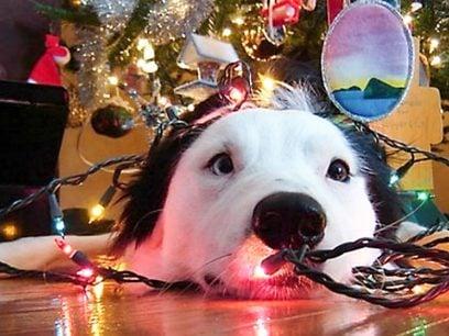 Dyrekaoset du VIRKELIG ikke VIL våkne opp til i Julen !