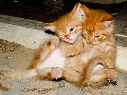 Nå forsvinner de søte og morsomme kattevideoer fra Internett