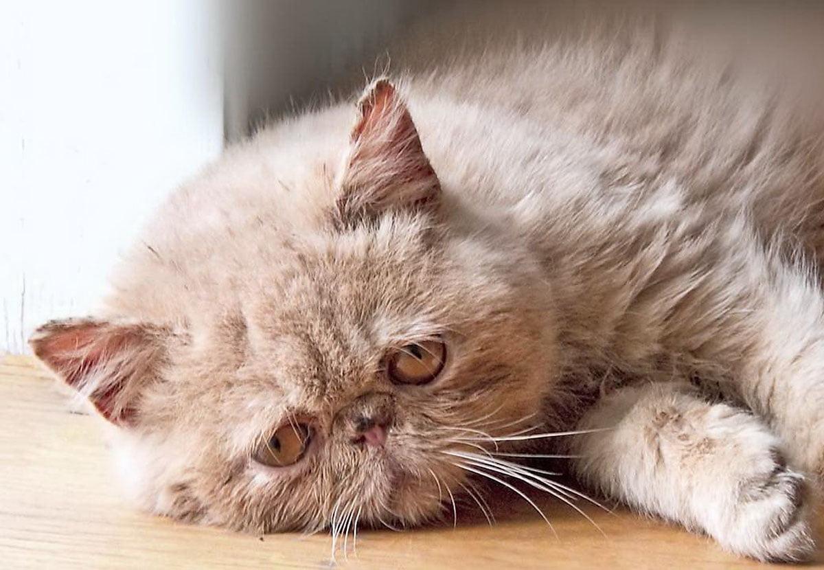 Noen gode grunner til hvorfor alle bør skaffe seg en katt