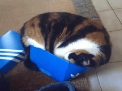20 utakknemlige katter som beviser at kattekurv er BORTKASTA!