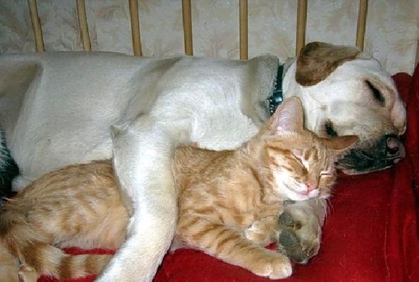 15 bilder som beviser at katter digger hunder