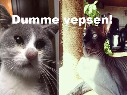 12 katter som hater veps etter å ha blitt stukket av de