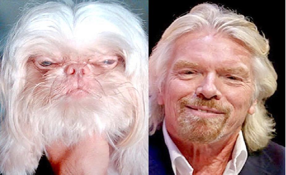 20 bevis på at kjendiser alltid har et dyr som dobbeltgjenger