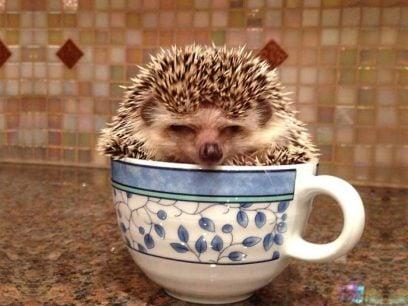 En kopp med nydelige dyr? Ja takk!
