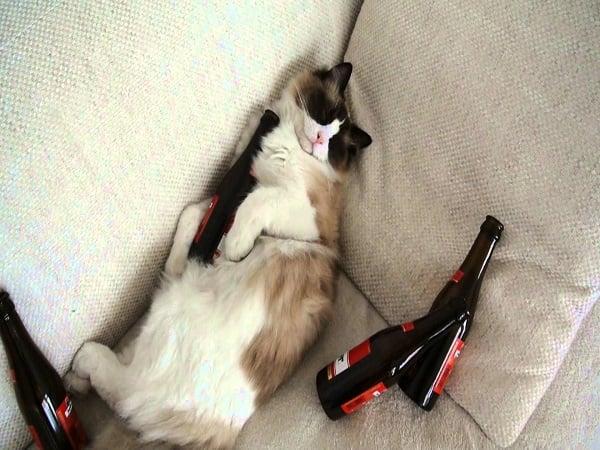 12 Bilder av ekstremt fyllesyke katter.