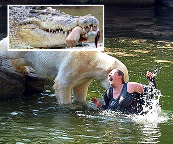 Når dyr angriper! OBS; sterke scener!