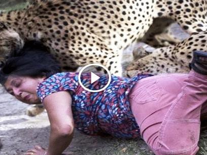OBS STERKE SCENER: Når dyr angriper mennesker!