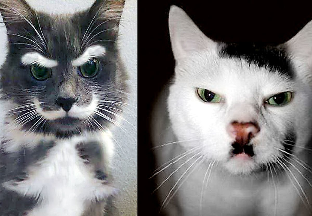 De utrolige pelsmønstrene – Møt Hitler-katten og Penis-hunden