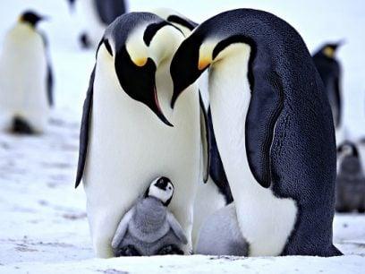 12 Pingvin giffer som er både søte og morsomme.