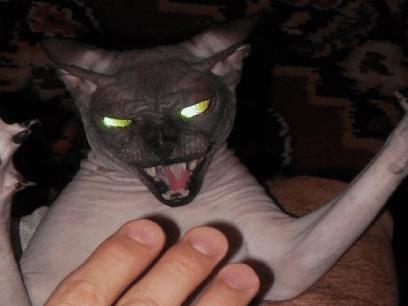 20 skumle bevis på at alle katter egentlig er DEMONER!
