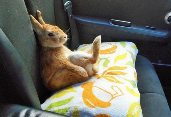Denne søte lille kaninen forstår korte menneskers problemer.