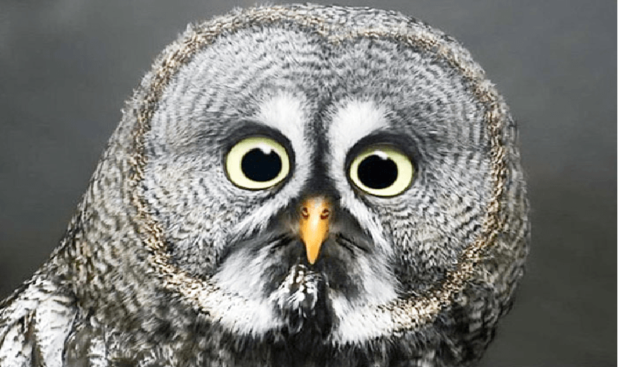 10 FULLSTENDIG sjokkerte dyr de ler deg ihjel av