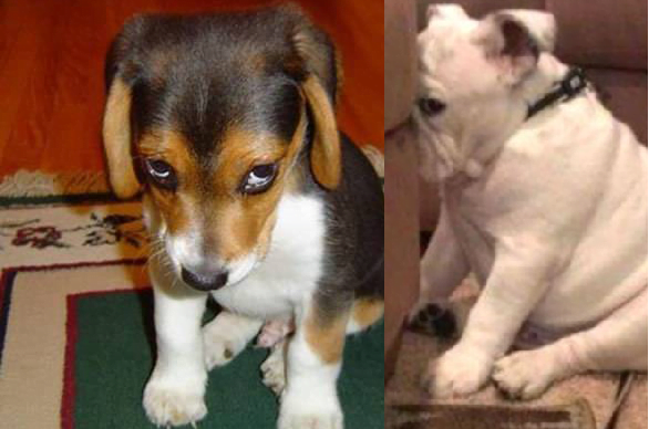 24 hunder som garantert har gjort noe veldig galt