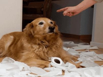 13 VELDIG skyldige hunder som vet de har gjort noe VELDIG galt!