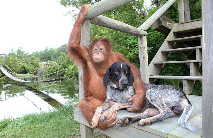 Se de fantastiske og uvanlige dyreparene