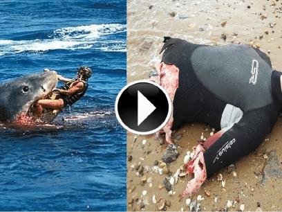 STERKE SCENER: 5 grusomme hai-angrep som ble filmet i 2016!